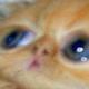 Аватар пользователя crazyuto