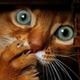 Аватар пользователя KeosDeFox