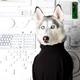 Аватар пользователя stevedogs