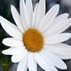 Аватар пользователя rbwz111