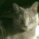 Аватар пользователя Olyaska80