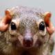 Аватар пользователя kireevatupaya