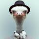 Аватар пользователя StrausEbu