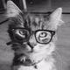 Аватар пользователя izumskuragoi