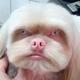 Аватар пользователя AndreyKuskov5678