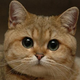 Аватар пользователя Yeyayou