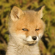 Аватар пользователя ManTheWind