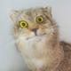 Аватар пользователя dmakc86