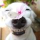 Аватар пользователя Marzipanov