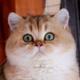 Аватар пользователя Lizzik
