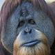Аватар пользователя Multick
