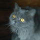Аватар пользователя catbehemot