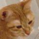 Аватар пользователя Donyelll
