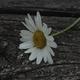 Аватар пользователя Sovva2.7