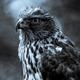 Аватар пользователя Sokol38