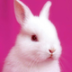 Аватар пользователя ksune4kin