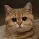 Аватар пользователя Inikentiy