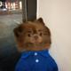 Аватар пользователя ms.fiesty