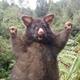 Аватар пользователя Bintturong