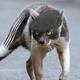 Аватар пользователя megavoltage