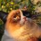 Аватар пользователя ufotocat