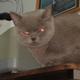 Аватар пользователя DeadRogue