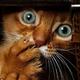 Аватар пользователя permyak1976