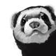 Аватар пользователя aen11