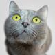 Аватар пользователя ValkeruFox