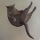Аватар пользователя Sopatich.kat