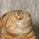 Аватар пользователя bososnack
