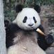 Аватар пользователя little.panda