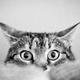 Аватар пользователя Haverov