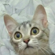 Аватар пользователя lokomonosov