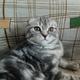 Аватар пользователя Dima017