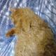 Аватар пользователя Pampkin32