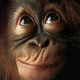 Аватар пользователя SaNchEs68