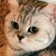 Аватар пользователя sovujkee