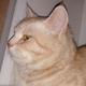 Аватар пользователя Fucs1