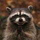 Аватар пользователя xemyl34