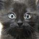 Аватар пользователя Akorius