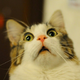 Аватар пользователя COLTA