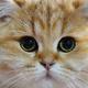 Аватар пользователя Annaret145