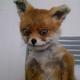 Аватар пользователя Fox.Writer