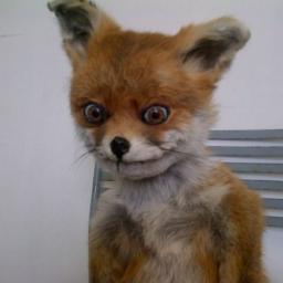 Fox.Writer