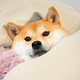 Аватар пользователя HeilKitler