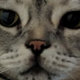 Аватар пользователя BrimstoneFox