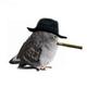 Аватар пользователя AlPakone