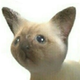 Аватар пользователя twirtle