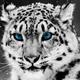 Аватар пользователя WestBurg